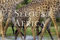The Sealous in Africa by Robert J. Ross