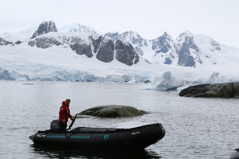 antarctica (7)