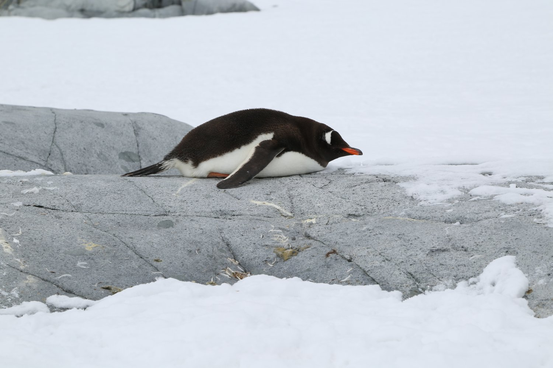 antarctica (8)