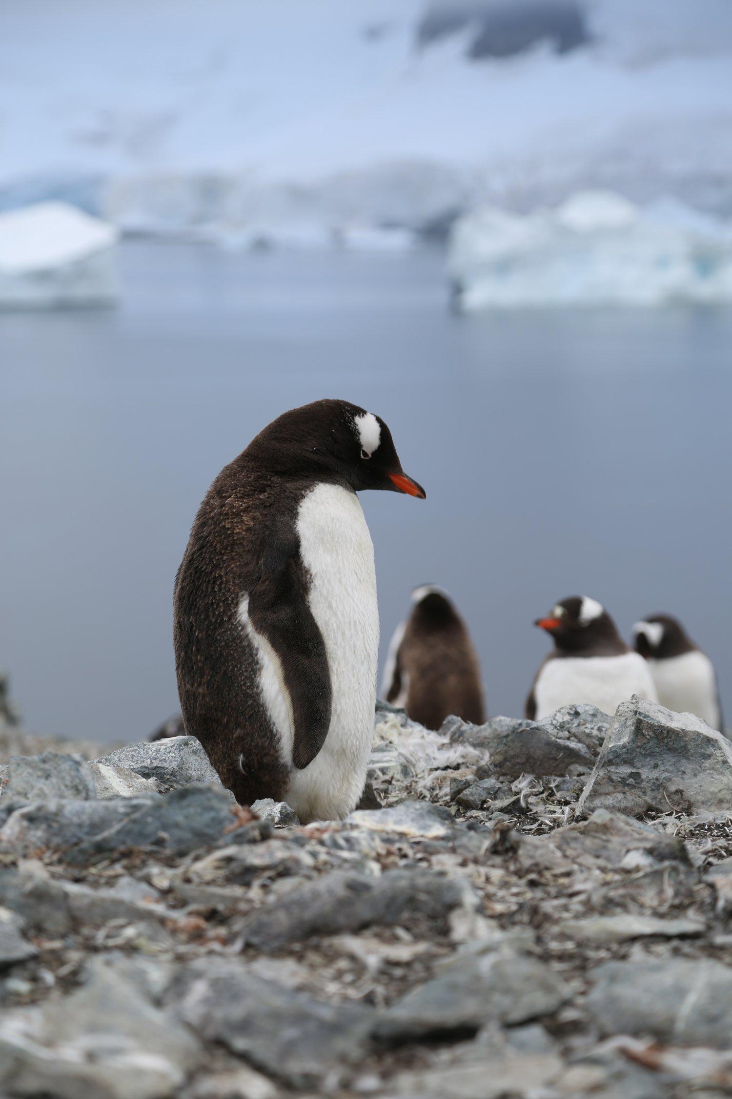 basecamp-ortelius-antarctica (10)