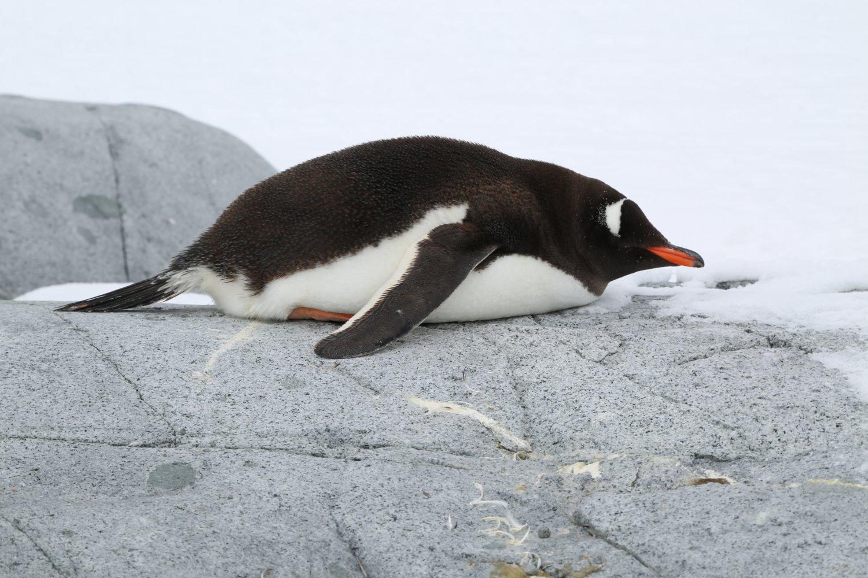 basecamp-ortelius-antarctica (12)