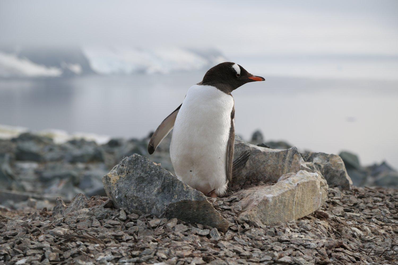 basecamp-ortelius-antarctica (9)
