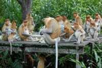 Hidden Treasures in Kota Kinabalu