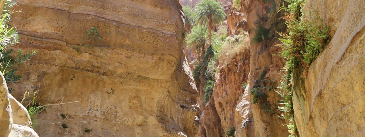 Greetings from the Jordanian Desert