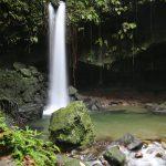 emerald-pool-dominica-1