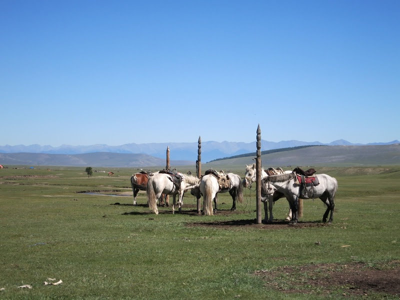 Our horses in Tsagaan Nuur