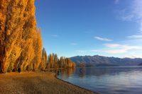 Hitchhiking Through New Zealand