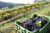 Verona's Vaunted Valpolicella Wines