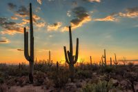 Top 10 Reasons to Visit Phoenix this Summer