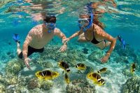 Tampa Bay Florida's Gulf Coast- Top 5 Activities