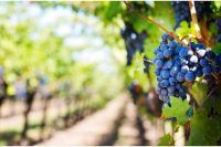 Best Places in the World for Wine Tour