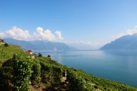 Exploring Wine in Switzerland's Lake Geneva Region