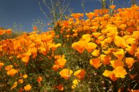 Flowers Everywhere! Southern California's Springtime Bloom
