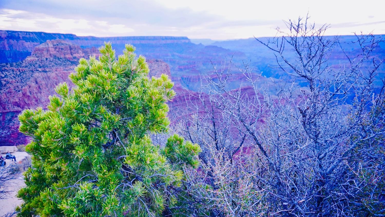 grand canyon tour for mandarin speakers
