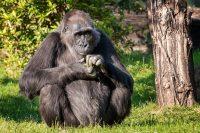 A Dream of Mine, To Take a Gorilla Safari in Uganda