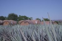 Five Cities Tequila Lovers Must Visit in the State of Jalisco